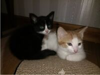 3 x KITTENS - Male / Female - Ginger / Black / Black and white