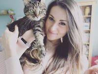 Insured Pet Sitter & Cat Sitter - Pet Sitting - Poole, Lilliput, Sandbanks, Bournemouth