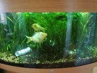 Free aquarium / fishtank plants