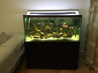 African Cichlid Fish with Full Setup Tank and ehiem canister Filtration system.