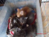 3 gorgeouse kittens left from litter