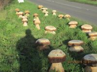 Wood carvings _ mushrooms