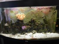 Complete Marine fish tank.