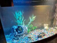 Fish Box X 64Ltr tank Tropical set up