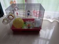 Fully equipped hamster cage
