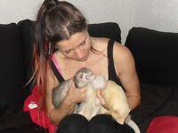 SMALL ANIMAL SITTER/SMALL PET SITTING/BOARDING RABBIT HAMSTER GUINEA PIG RAT CHINCHILLA FERRET