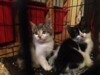 Two very beautiful kittens