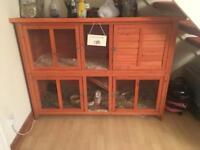 2 x Female Guinea Pigs & Two Story Hutch indoor/outdoor