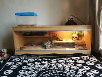 Leopard gecko reptile and glass vivarium with all accessories