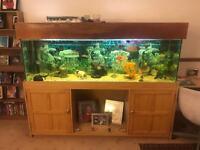 6 foot fish tank with fish full set up