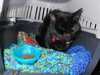 Black female cat found near Arundel Avenues L17 / L8