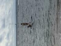 stand up paddle SUP rental