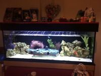 Big fish tank for sale come with extras pump and led light