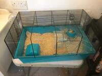 Syrian hamster 2 months old with set up