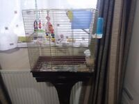 Two budgies for sale with cage, food and other accessories