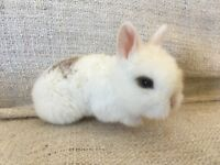 Rabbits available to reserve