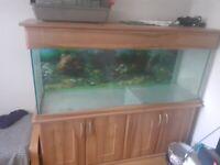 5ft oak Aquarium