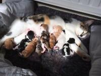 Mixed breed kittens