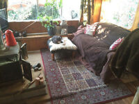 Studio cabin fully furnished for sale in the Highland