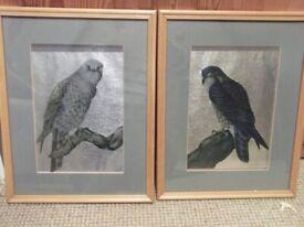 Birds of Prey Pictures on Titanium Paper .. framed, glazed