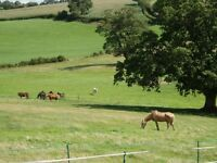 Grass Livery / DIY Grazing Available