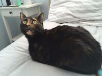 New home needed for small tortie cat