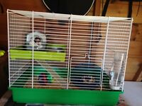 Lovely young black and white hamster with cage, accessories, bedding and food included
