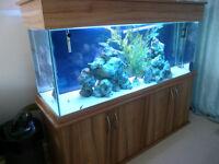 Beech 4 door aquarium. holds 500 ltrs.