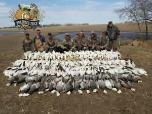 Guided Spring Snow Goose Hunts In Saskatchewan $350