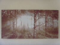 Birch Forest Sunlight Large Canvas Print Picture