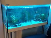 Eheim Fish tank full setup