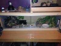 4ft reptile viv for sale