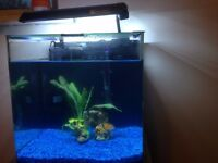 22L Aquarium for sale