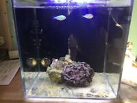 Marine / salt water tank with everything you need! Skimmer live rock fish pump etc