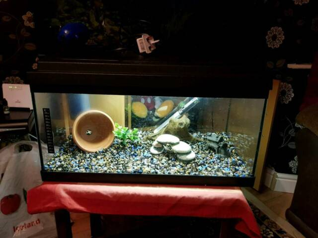 Astounding Aquarium Full Set Up Fish Tank In Kingstanding West Midlands Gumtree Download Free Architecture Designs Scobabritishbridgeorg