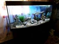 5 FT JEWEL VISION BOWFRONT FISHTANK IN BLACK IN EXCELLENT CONDITION
