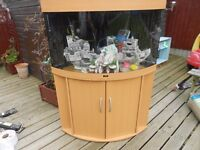 large trigon corner fish tank