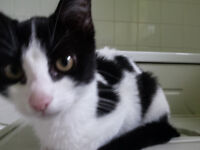 black and white female kitten ready to leave
