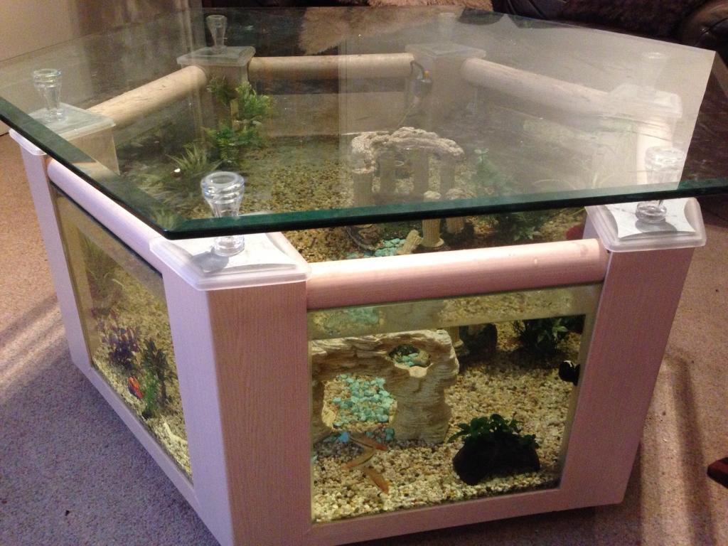 Coffee Table Fish Tank In Middlesbrough North Yorkshire Gumtree