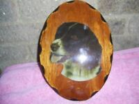 English Springer Spaniel picture on wood