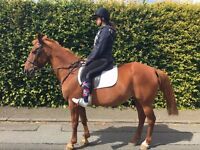 15HH HAPPY HACKER FOR SALE