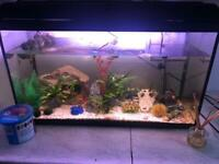 Fish tank full set up MASSIVE REDUCTION can discuss price
