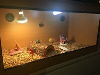 Vivarium in good condition for sale