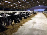 Herd Herdsperson for 400 strong dairy farming estate in Lincolsnhire with good salary and house