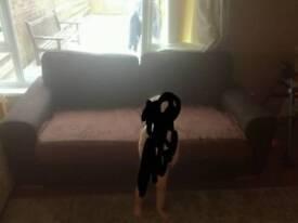 Free brown comfy sofa