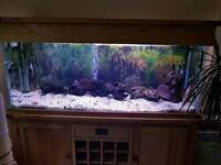 Fish tank complete with fish in solid oak wine rack cabinet