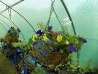 NEW Garden Hanging Baskets