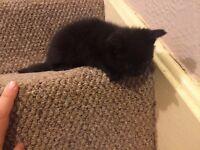Kittens £35