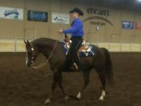 HORSE BOARD & WESTERN RIDING LESSONS