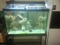 70 gallon saltwater fish tank